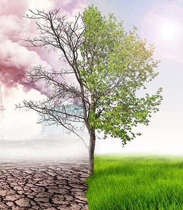 Çevre Kirliliği Sorumluluk Sigortası - İnci Sigorta